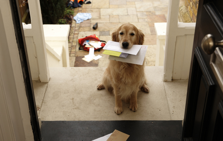 loyal dog at door with mail