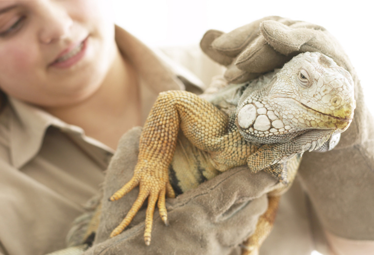 Keap partner created digital reptile show