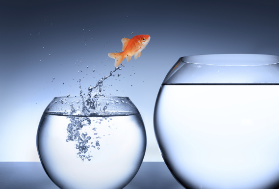 goldfish overcoming obstacles